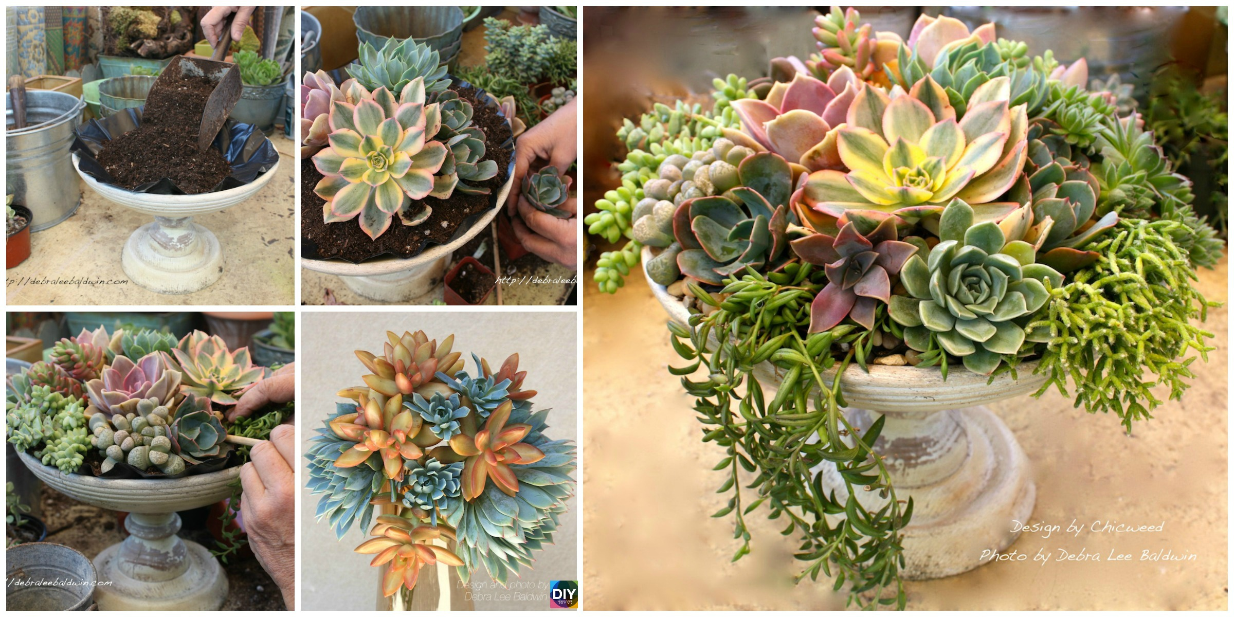 DIY Succulent Centerpieces in 5 Easy Steps