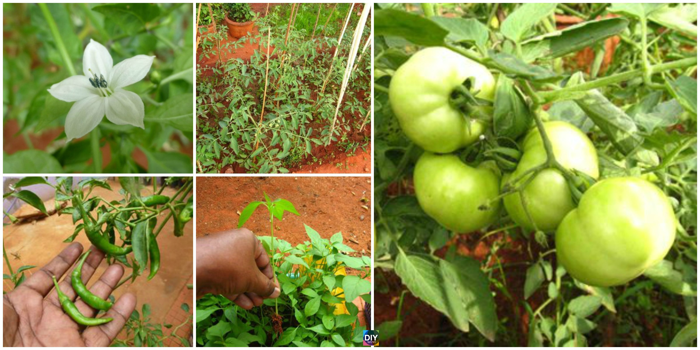 How to DIY Small Kitchen Garden in Your Backyard