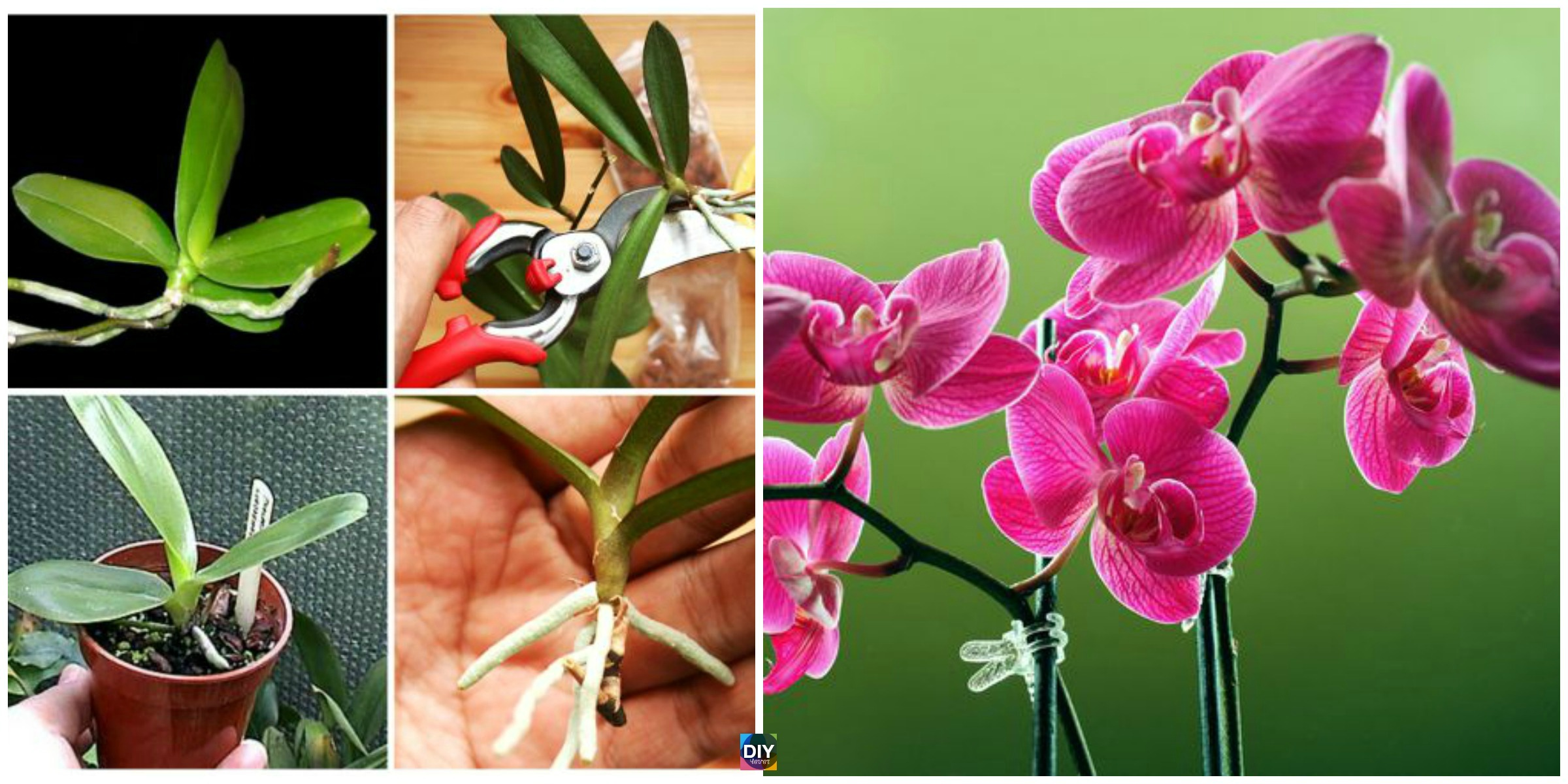 How to Grow Orchid at Home ( So Easy )