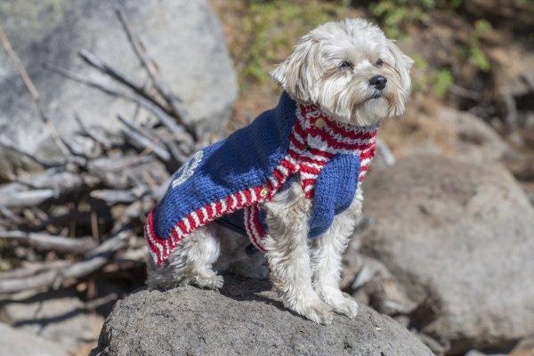 Knitted USA Dog Sweater - Free Pattern